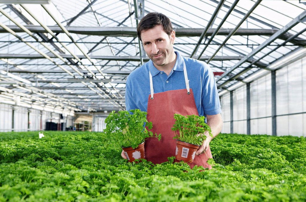 Stock Photo: 1815R-114783 Germany, Bavaria, Munich, Mature man in greenhouse between parsley plants