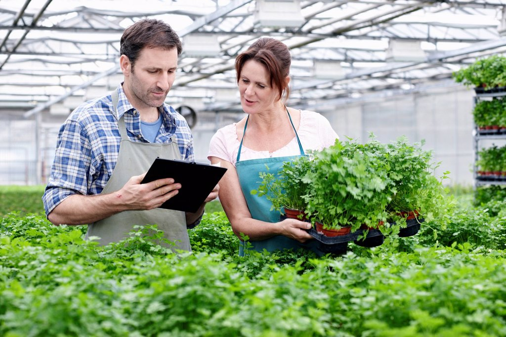 Stock Photo: 1815R-115012 Germany, Bavaria, Munich, Mature man and woman with clip board in greenhouse