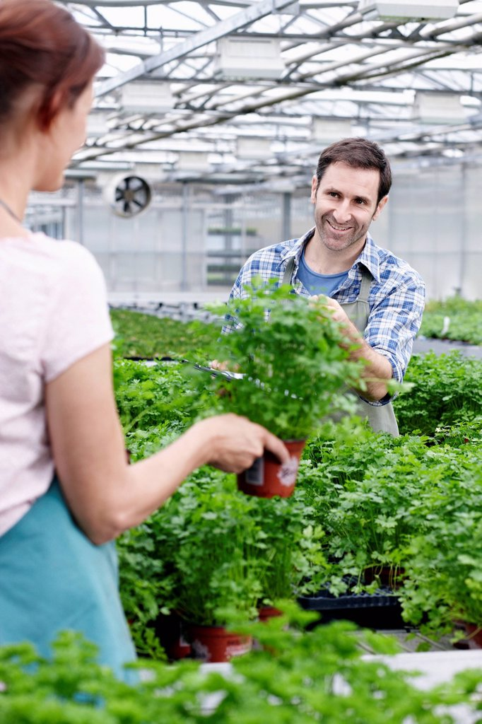 Germany, Bavaria, Munich, Mature man and woman in greenhouse between parsley plants : Stock Photo