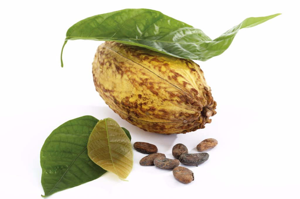 Cacao plant, hull and beans : Stock Photo