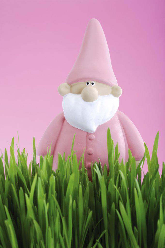 Pink garden gnome : Stock Photo