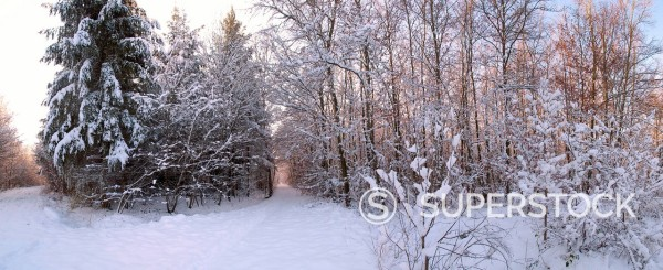 Stock Photo: 1815R-117818 Germany, View of snow covered forest