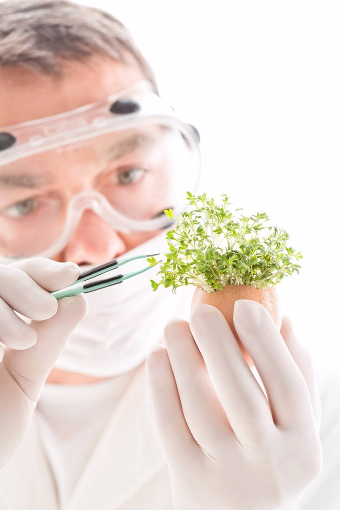 Stock Photo: 1815R-118925 Scientist removing cress with tweezers from egg shell, close up