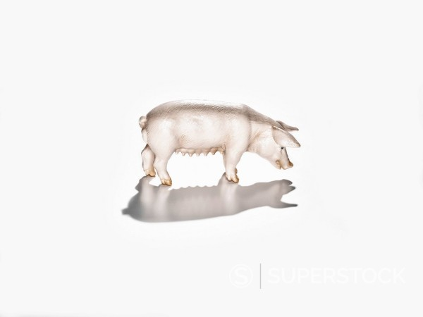 Toy pig on white background, close-up : Stock Photo