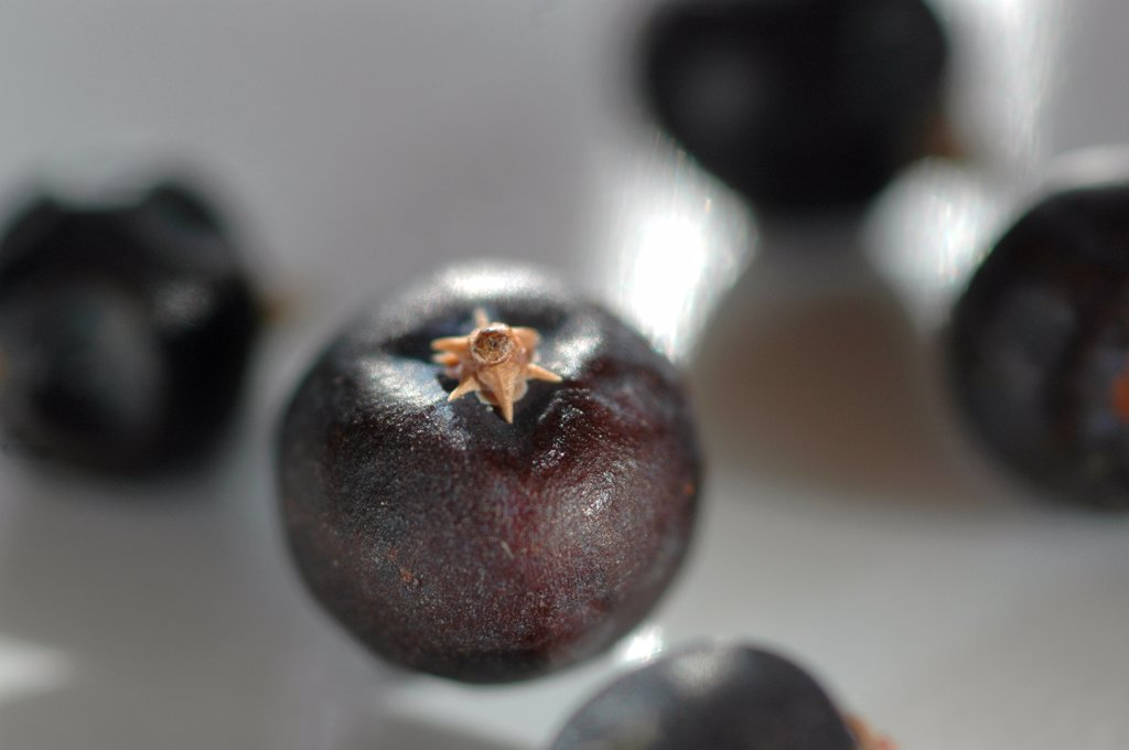 Juniper berries, close-up : Stock Photo