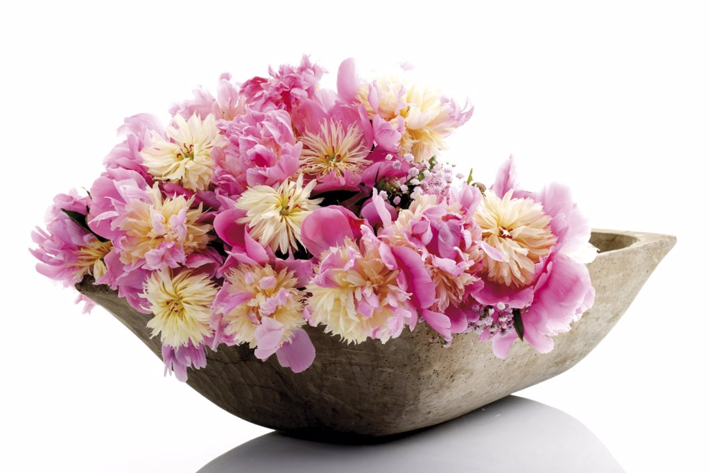 Bunch of peonies in bowl (Paeonia), close-up : Stock Photo