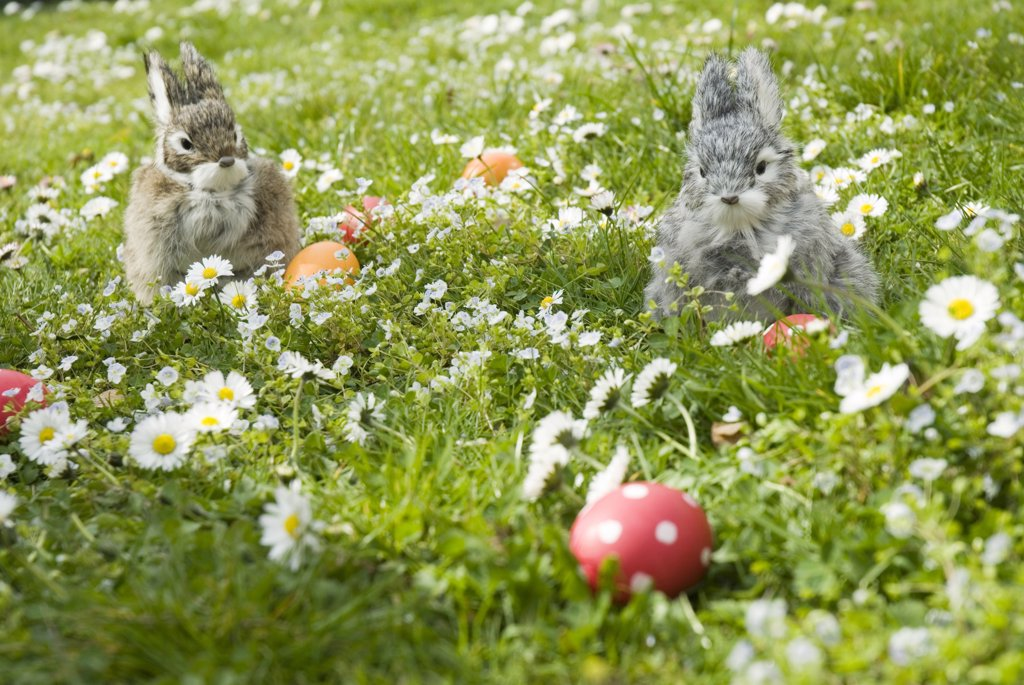 Easter bunnies and eggs in meadow : Stock Photo