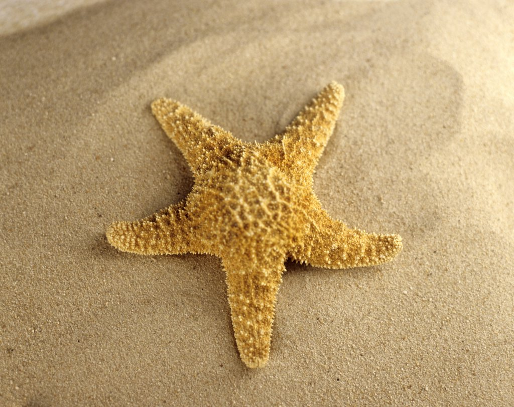 Stock Photo: 1815R-23067 Starfish on beach, close-up