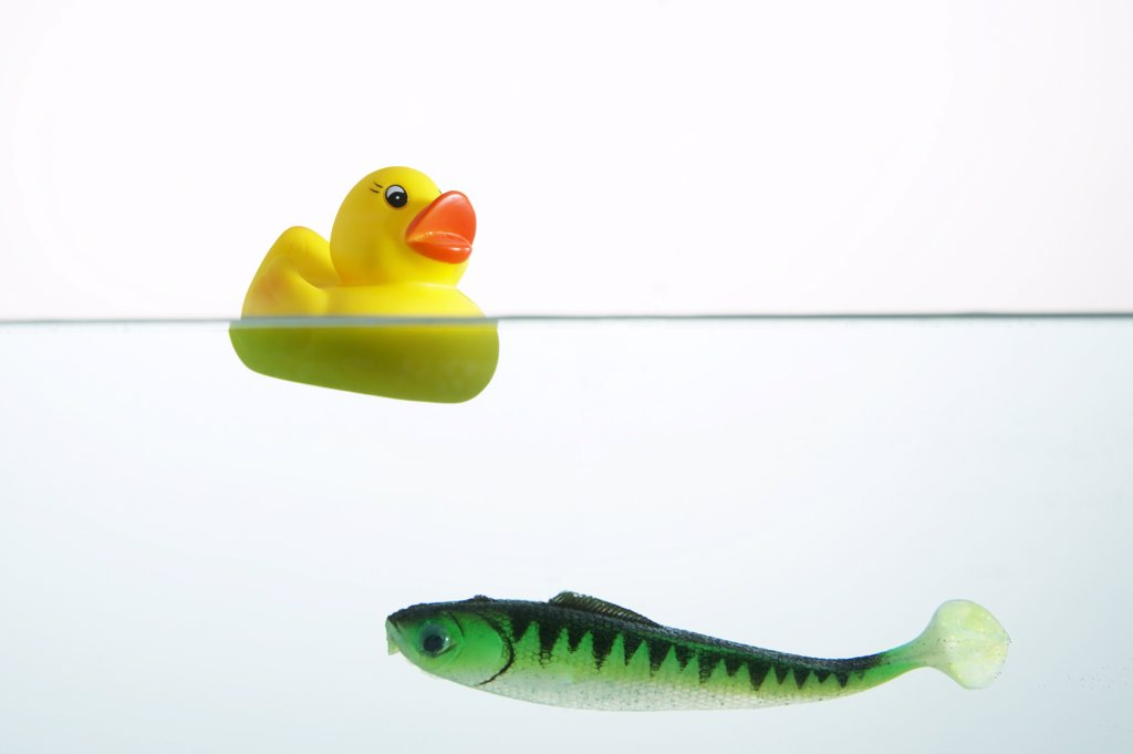Yellow rubber duck and plastic fish in water, close-up : Stock Photo