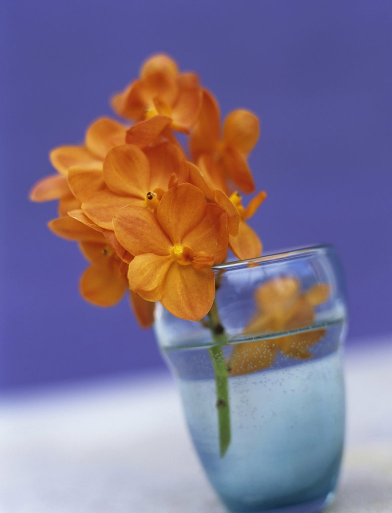 Stock Photo: 1815R-24488 Orange orchid in glass, close-up