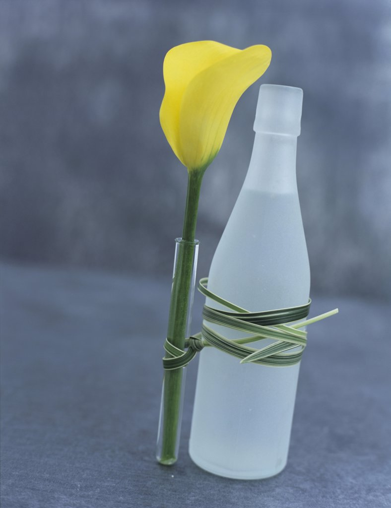 Calla lily in vase, tied at bottle, up close-up : Stock Photo