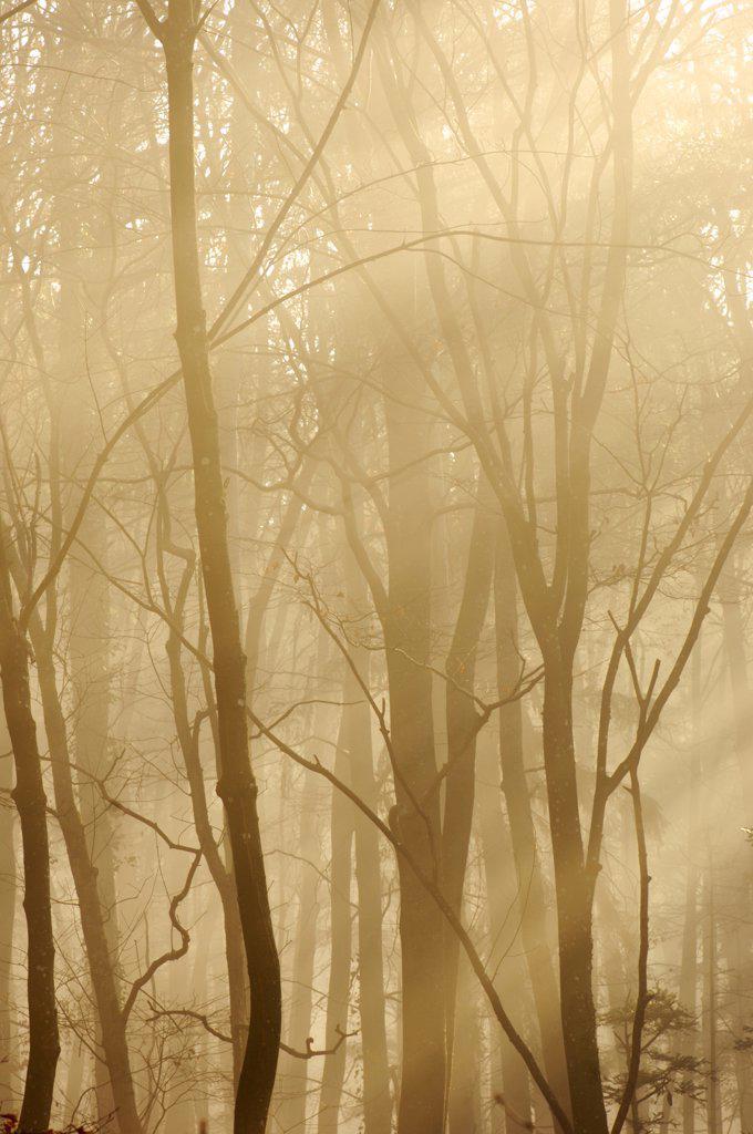 Trees in twilight : Stock Photo