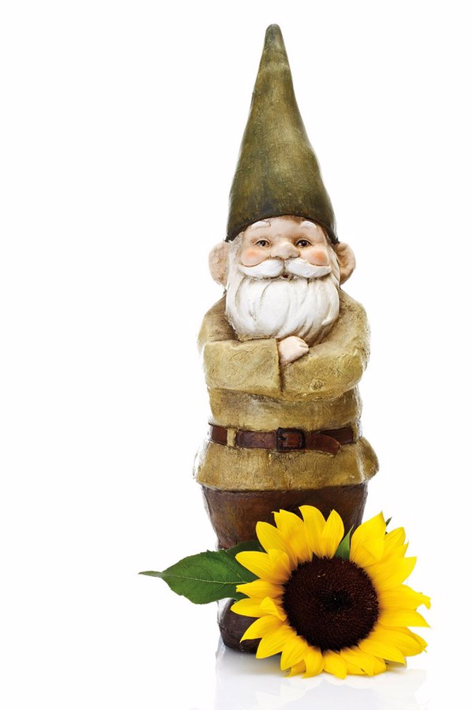 Garden gnome and sunflower : Stock Photo