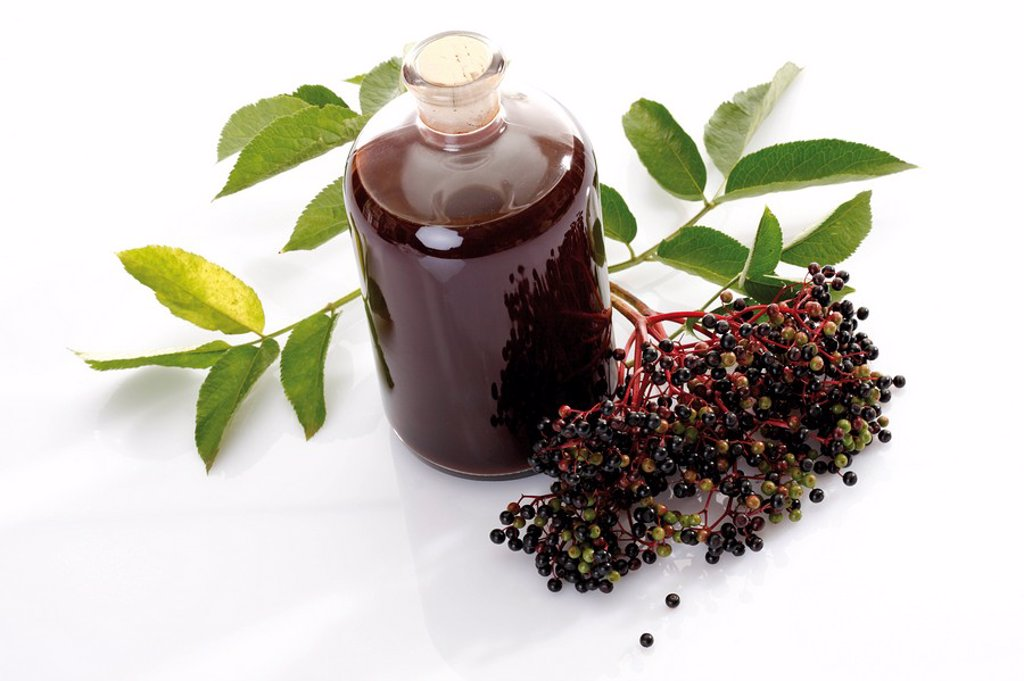 Elderberry wine and black elder Sambucus nigra, elevated view : Stock Photo