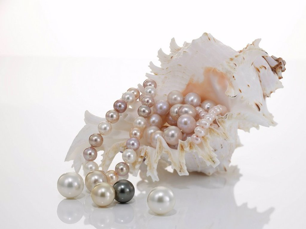 Pearl necklet and pearls with nautilus : Stock Photo