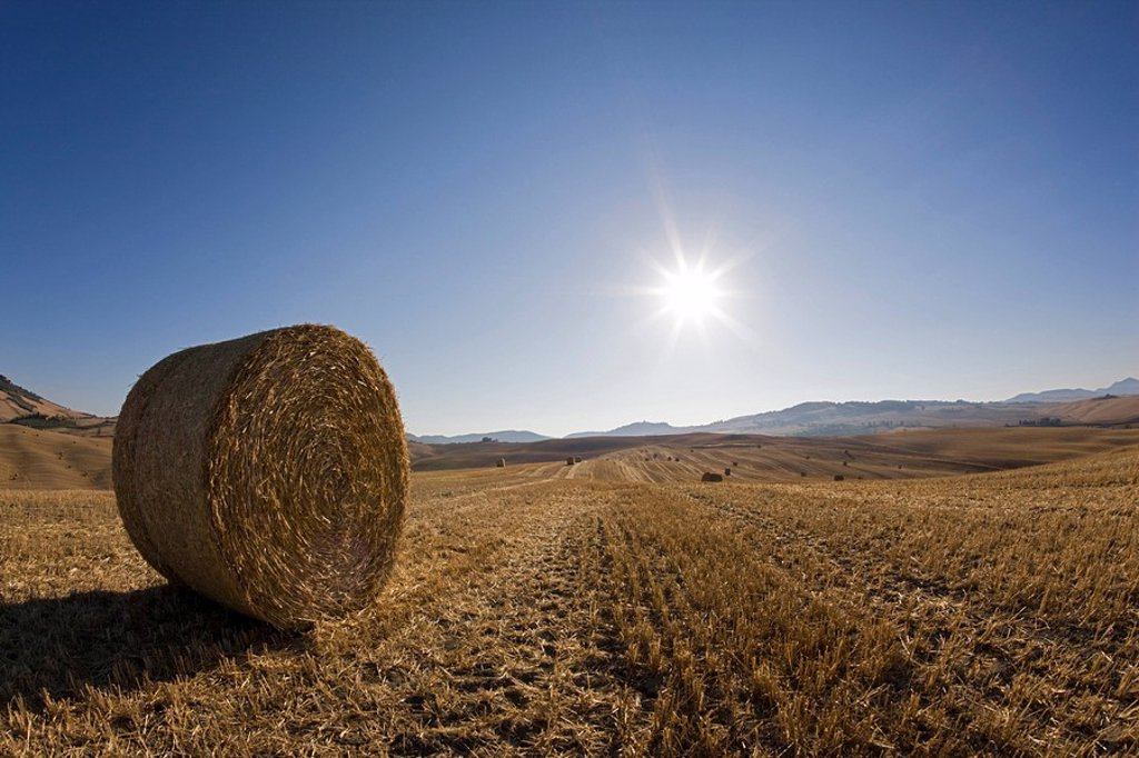 Italy, Tuscany, Bale of straw on harvested fields : Stock Photo