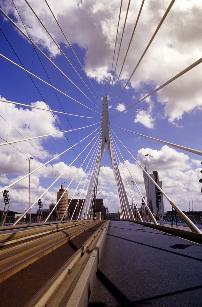 Netherlands, Rotterdam, Erasmus bridge, low angle view : Stock Photo