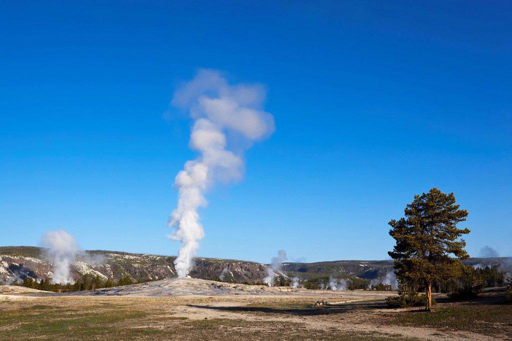 USA, Yellowstone Park, Wyoming, Old Faithful Geyser : Stock Photo