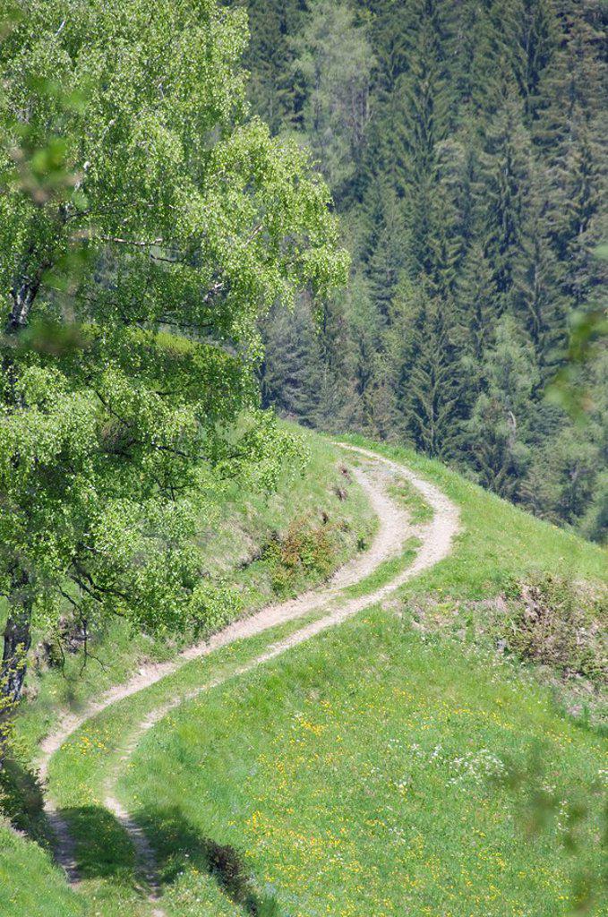 Stock Photo: 1815R-55783 Italy, South Tyrol, Farm track and woodland
