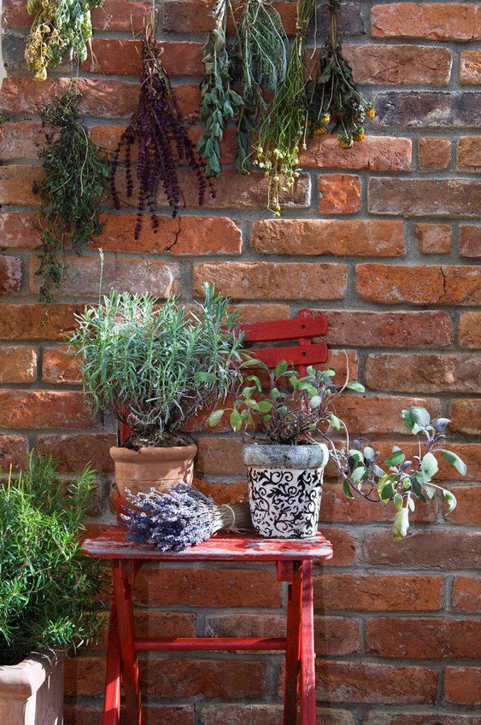 Stock Photo: 1815R-56265 Austria, Salzburger Land, Dried herbs on brick wall, close up