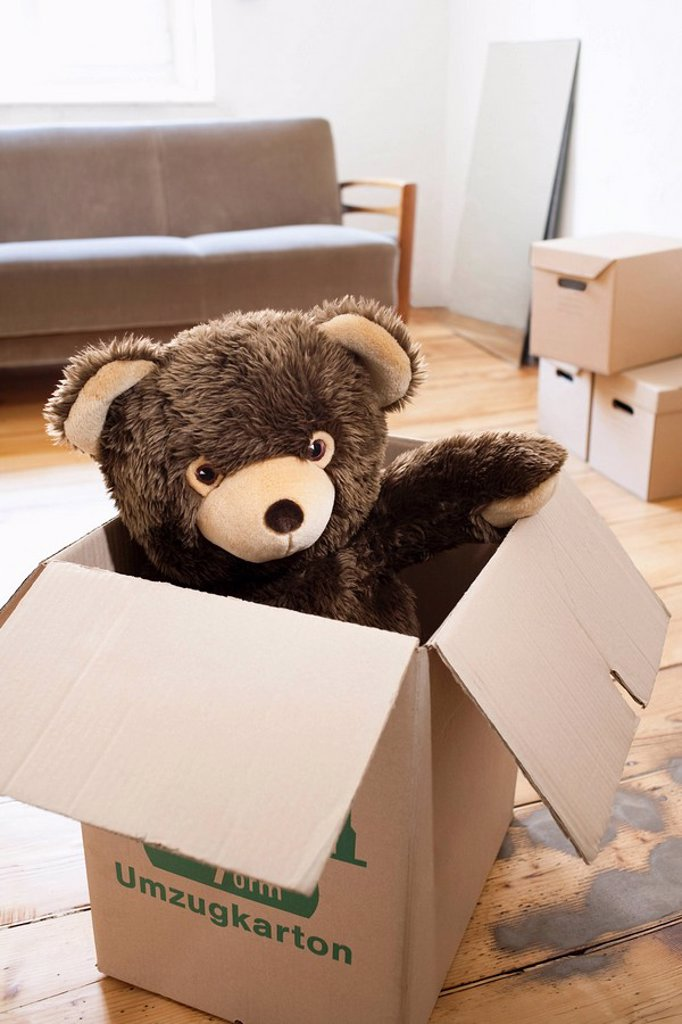Teddy in a cardboard box : Stock Photo