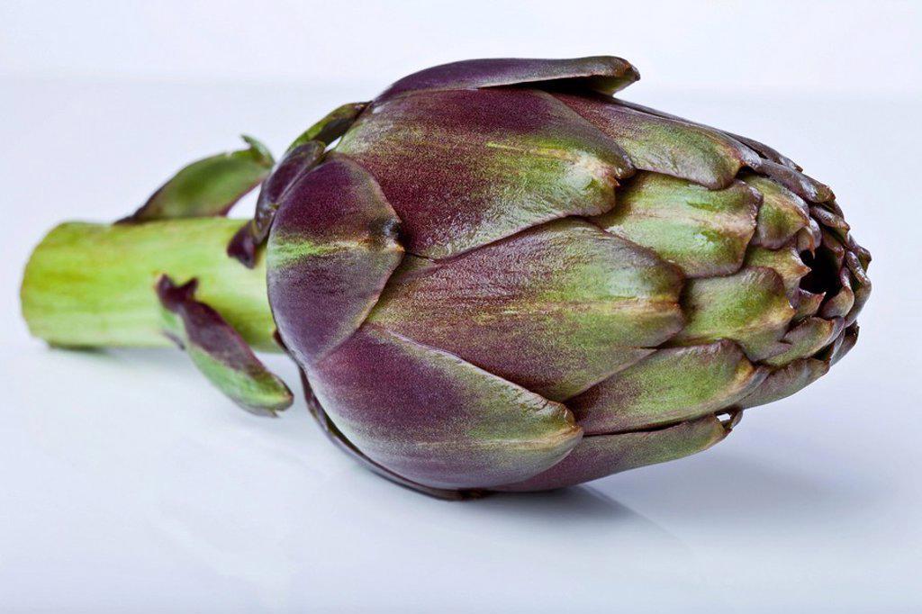 Stock Photo: 1815R-58013 Single artichoke Cynara cardunculus, Syn. Cynara scolymus, close up