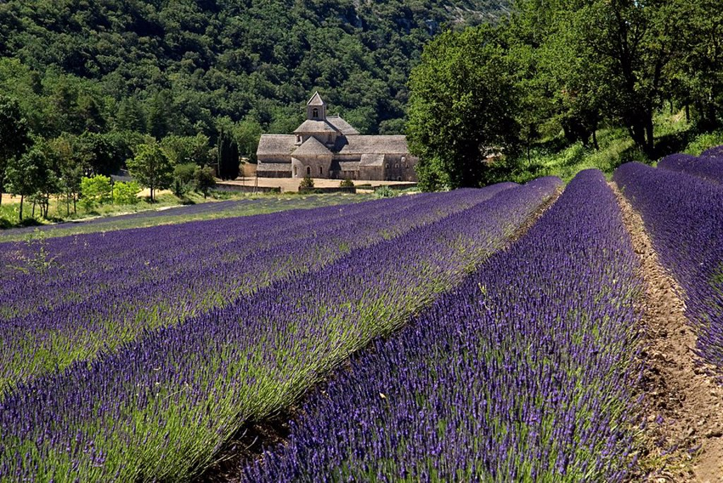 Stock Photo: 1815R-59870 France, Provence, SÈnanque Abbey, Lavender fields in foreground