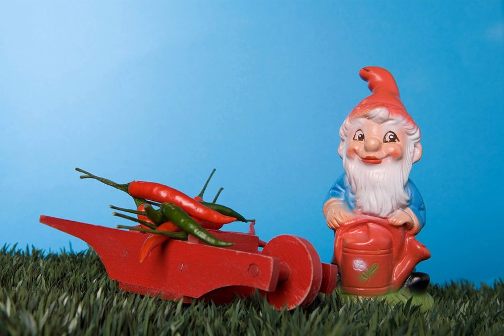 Garden gnome, Chili peppers placed on hand barrow : Stock Photo