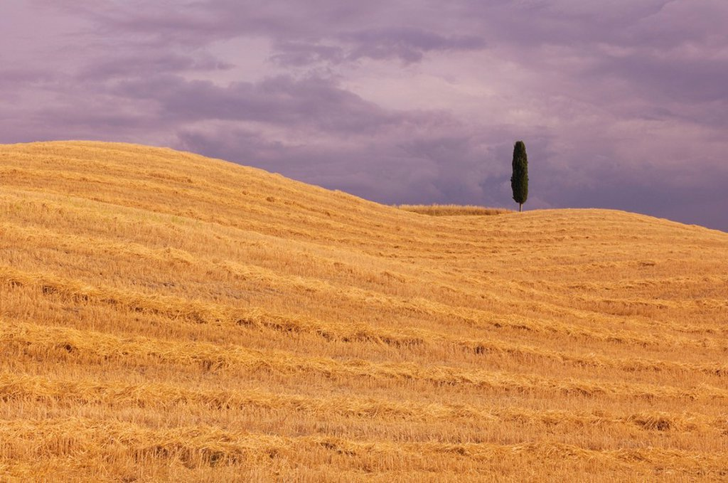Italy, Tuscany, Harvested fields : Stock Photo