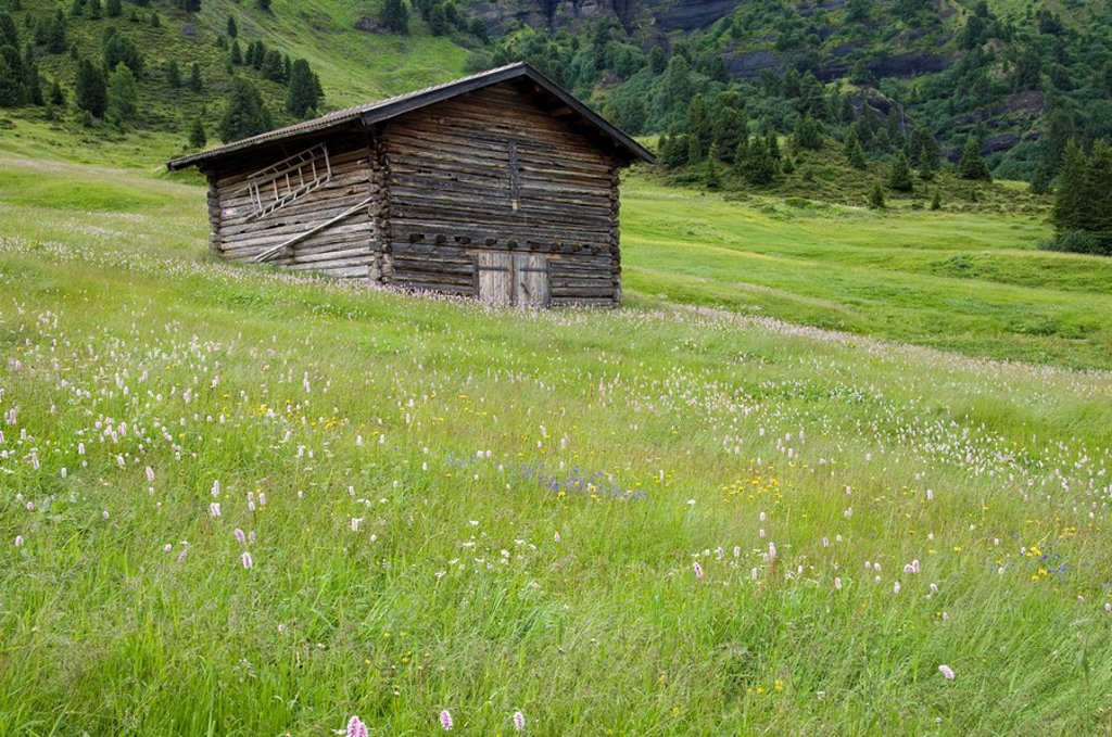 Stock Photo: 1815R-61268 Italy, South Tyrol, Barn in field