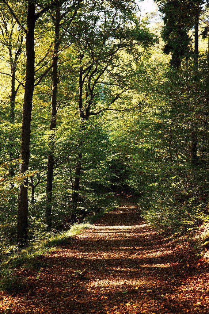 Stock Photo: 1815R-71062 Germany, North Rhine_Westphalia, Siebengebirge, Rheinsteig, Dirt track through forest