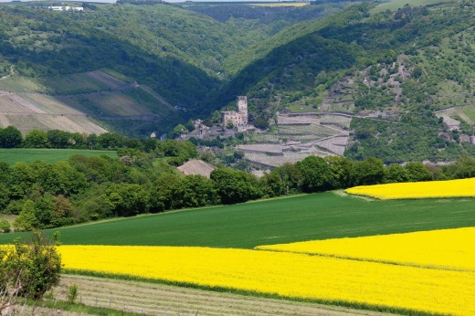 Europe, Germany, Rhineland_Palatinate, View of gutenfels castle and rape fields : Stock Photo