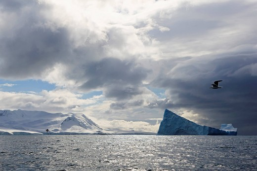 South Atlantic Ocean, Antarctica, South Shetland Islands, View of iceberg in front of Elephant Island and seagull flying over sea : Stock Photo