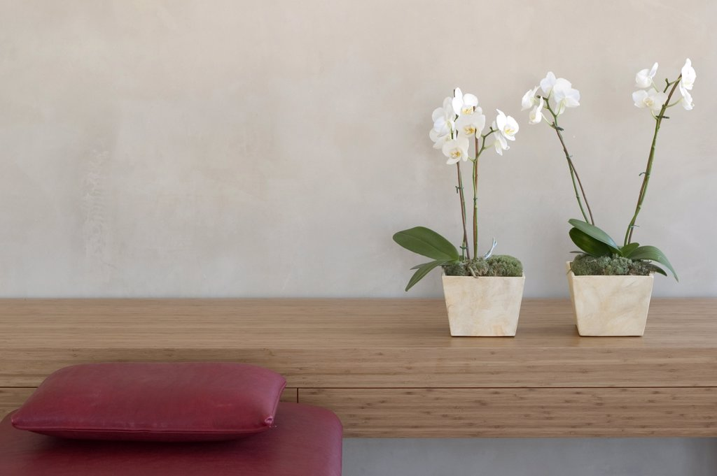 Stock Photo: 1815R-8142 two potted orchids on a shelf in front of a wall with red couch