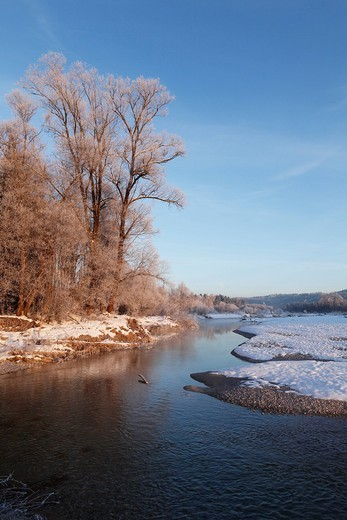 Germany, Upper Bavaria, Geretsried, View of trees and river isar : Stock Photo