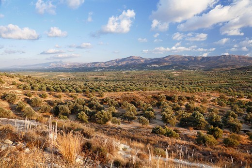 Greece, Crete, Messara Valley, View of landscape with bushes and mountains in background : Stock Photo