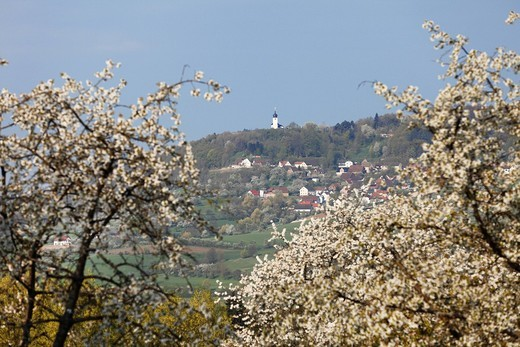 Stock Photo: 1815R-83791 Germany, Bavaria, Franconia, Franconian Switzerland, Reifenberg, View of chapel on top of town with cherry blossoms in foreground