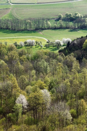 Stock Photo: 1815R-83803 Germany, Bavaria, Franconia, Franconian Switzerland, Walberla, View of deciduous forest at Ehrenbach valley in spring
