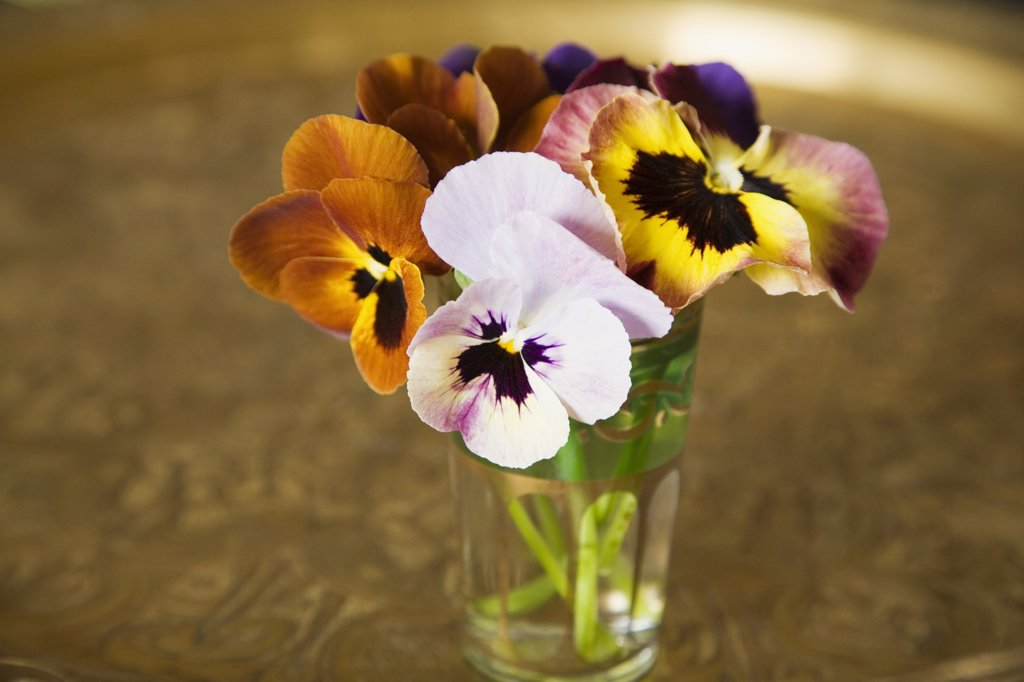 Stock Photo: 1815R-8465 Pansies