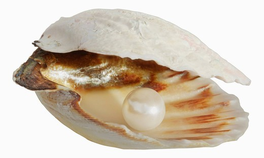 Pearl in empty shell against white background, close up : Stock Photo