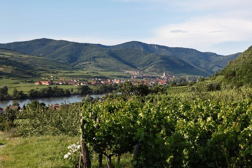 Austria, Lower Austria, Wachau, Weissenkirchen, View of village with Danube river and vineyard in foreground : Stock Photo