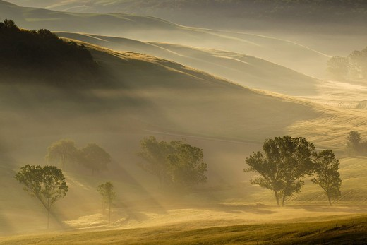 Stock Photo: 1815R-91294 Italy, Tuscany, Crete, View of trees and fog in morning
