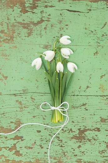 Bunch of snowdrops : Stock Photo