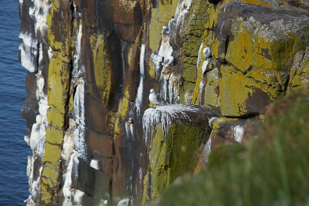 UK, Northumberland, seabirds on cliff face : Stock Photo