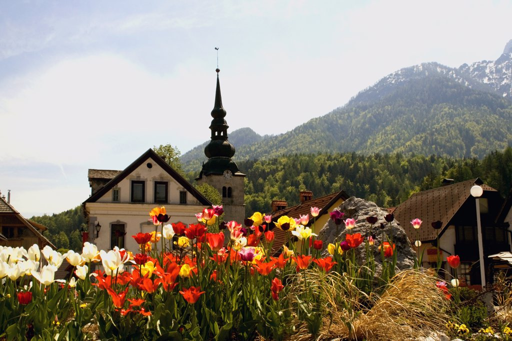 Stock Photo: 1818-244 Tulips with a church in the background, Kranjska Gora, Slovenia