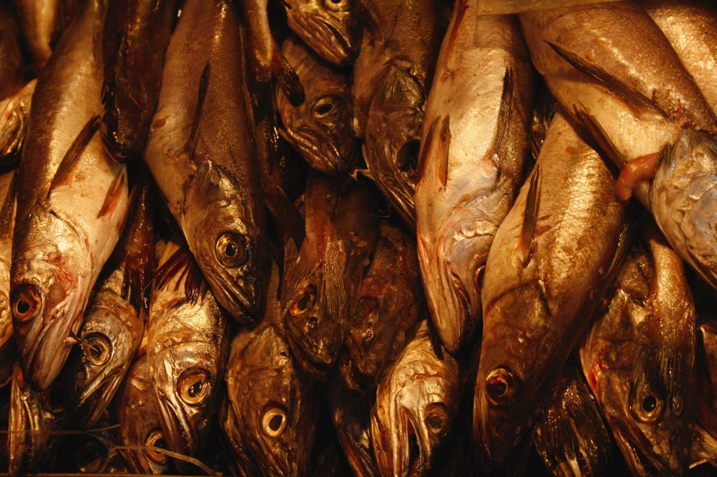 Herrings in a fish market, Chile : Stock Photo
