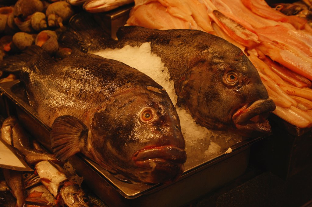 Groupers in a fish market, Chile : Stock Photo