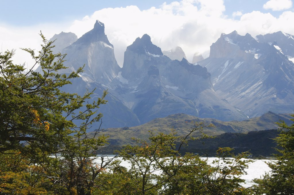 Stock Photo: 1818-352 Trees with a mountain range in the background, Torres del Paine National Park, Patagonia, Chile