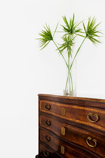 Vase on a cabinet : Stock Photo