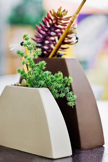 Stock Photo: 1825-3363 Close-up of two flower pots